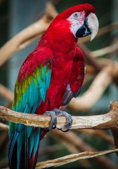Ik heb een zwak voor papegaaien