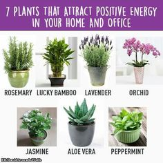 Home Gym - 7 Plants that attract positive energy in your home and office - http://amzn.to/2fSI5XT
