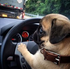 "Bah Humpug! — bobdoom:   ""Uh oh… I just had a Final Destination..."