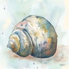 Watercolor Shells IV Canvas Art - Tre Sorelle Studios x Watercolor Painting Techniques, Watercolor Projects, Watercolor Paintings, Watercolors, Seashell Painting, Seashell Art, Sea Life Art, Watercolor Ocean, Art Plastique
