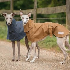 Whippet Coat With Wrap Collar