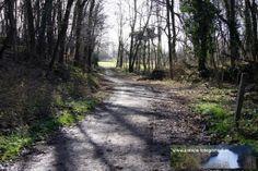 """Strecke Bonn-Oberkassel - Kloster Heisterbach 02.02.2014 - hier verlassen wir kurz den Wald, den wir auch erst nach dem """"Rheinblick"""" wieder betreten werden"""