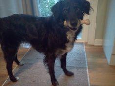 http://www.nylabone.com/dog-house-chatter/2012/08/20/the-many-uses-of-a-nylabone/ #Nylabone #pet #dog