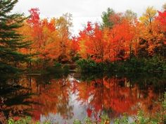 Fall in Northern Ontario, Canada. October Country, Algonquin Park, Nature Photos, Autumn Photos, Fall Pictures, Outdoor Art, Autumn Trees, Amazing Nature, Belle Photo
