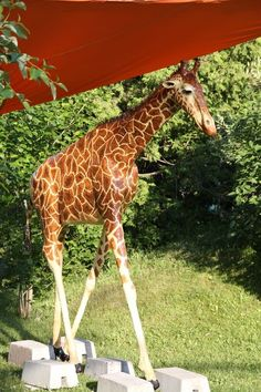 How Michele Made Her Paper Mache Giraffe – Ultimate Paper Mache