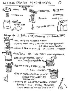 Getting Started with Kombucha Kombucha Scoby, How To Brew Kombucha, Kombucha Recipe, Making Kombucha, Kombucha Brewing, Fermentation Recipes, Homebrew Recipes, Recipe For L, Homemade Cider