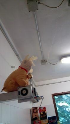 rabbit cuore2