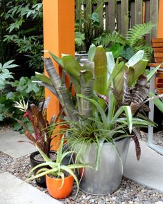 Bromeliads in the garden. Love the bright orange color on the post, too.