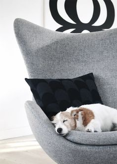 Arne Jacobsen Egg Chair in soft grey - Via Riazzoli | | Kuddar Cushion | Dog