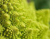 Fractal Romanesco Broccoli
