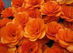 Flowers made of birch wood..http://www.etsy.com/listing/67396787/birch-wooden-flowers-wood-roses-orange?ref=pr_shop