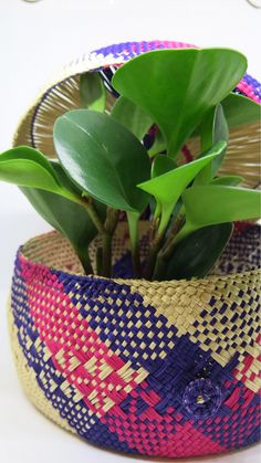 Unique design by Carolina Delgado-Duruflé. Toquilla Palm, hand woven with natural ingredients by women-led businesses in Nariño, Colombia. Coffer, Hand Weaving, Palm, My Etsy Shop, Basket, Unique, Design, Art, Design Comics