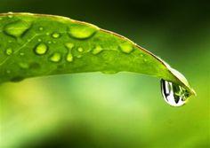Haga su propio líquido fertilizante para el jardín