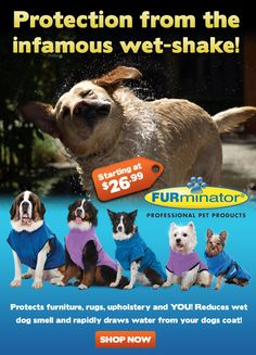 Sign up for exclusive deals at www.renspets.com Dog Smells, Play S, Dog Coats, Flyers, Your Dog, Sign, Pets, Drawings, Ruffles