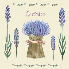 33487591-Vector-Illustration-of-a-Lavender-Background-Watercolor-illustration-for-greeting-cards-invitations--Stock-Vector.jpg (1300×1300)