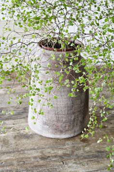 Beautiful grey ceramic vase with a nature touch.