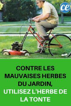Contre les Mauvaises Herbes du Jardin, Utilisez l'Herbe de la Tonte.