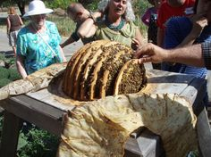 Inside the HangeKorb - Hanging Basket hive