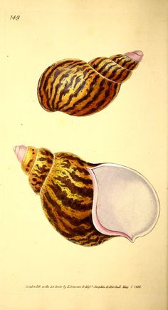 v.5 (1827) - The Naturalist's repository, or, Monthly miscellany of exotic natural history / - Biodiversity Heritage Library