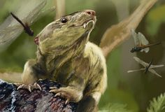 Toothy, Rodent-like Reptile Is Our Ancient Forebear