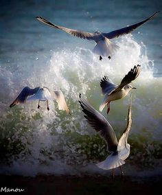 """""""The gulls swooped silently, two, then all from their heights, pouncing on prey."""" (8.76-77)"""