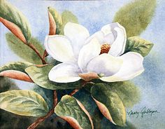 Magnolia Painting by Nancy Goldman - Magnolia Fine Art Prints and Posters for Sale