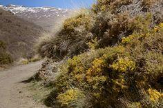 Altijd is hier wel ergens sneeuw te zien. #willemlaros.nl #flickr #photography #travelphotography #traveller #canon #snpnatuurreizen #canon_photos #fotoreis #travelblog #reizen #reisjournalist #travelwriter#fotoworkshop #reisfotografie #landschapsfotografie #follow #alpujarras #capileira #granada #spanje #fb