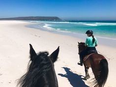 Why True Traveller Insurance is the Best Backpacker Insurance Activities In Cape Town, Travel Agency Website, Travel Rewards, Overseas Travel, Worldwide Travel, Travel Planner, Africa Travel, Beautiful Islands, Horse Riding