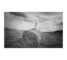 Farm Dog by Jennifer Meyers #potterybarn