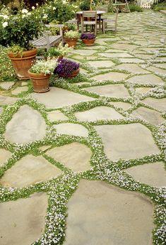 Stunning 55 Low Maintenance Front Yard Landscaping Ideas https://insidecorate.com/55-low-maintenance-front-yard-landscaping-ideas/