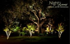 This LED lighting project in Kingsland, Texas features a beautiful large live oak tree.
