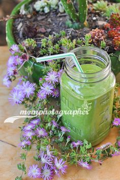 avocado-spinach-cucumber smoothie