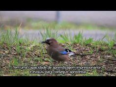 A short documentary about Lisbon's biodiversity and the work that LxCRAS has been developing as a wildlife recovery center.   Uma curta metragem documental sobre a biodiversidade da cidade de Lisboa e o trabalho que o LxCras tem vindo a desenvolver enquanto centro de recuperação de animais selvagens.