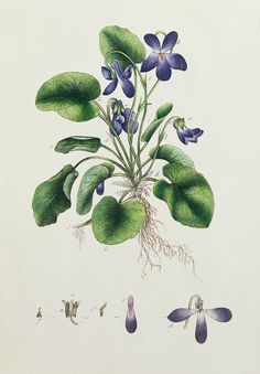 Violets flower art