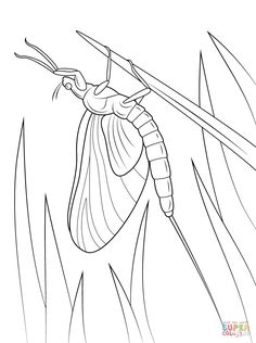 grasshopper on flower coloring page from grasshoppers category select from 24340 printable crafts of cartoons