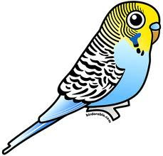 budgie cartoon characters - Google Search