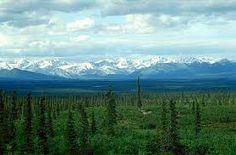 Alertan sobre la degradación de los bosques boreales. Imagen de taiga en Alaska.