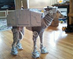YEP, that`s a whippet!! Looks like we found Axel`s Halloween costume!