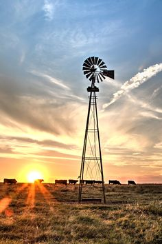 Western home decor, rustic wall art photo or canvas print of black Angus cattle and an old windmill at sunset. Farm Windmill, Old Windmills, Westerns, Ranch Life, All Nature, Old Barns, Le Moulin, Sunset Photos, Agra