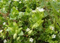 Herbs, Health, Garden, Nature, Plants, Outdoor, Food, Mixer, Outdoors