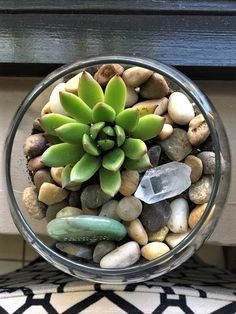 Feng Shui Lucky Plants- Succulents Terrarium They are very easy to care for and have the most radiant colors. Place them on your desk, on your kitchen window or counter, in your patio, and even in your bedroom.