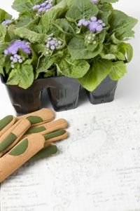 The Gardening Calendar gives Florida gardeners a monthly guide for what to plant and do in their gardens and includes links to useful gardening websites, all based on University of Florida research and expertise.