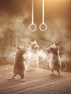 Maus Illustration, Illustrations, Felt Animals, Cute Animals, Muñeca Diy, Capybara, Felt Mouse, House Mouse, Rodents