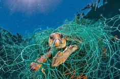 Planet Or Plastic Campagna Contro Inquinamento Plastica National Geographic The Animals, Ocean Pollution, Plastic Pollution, National Geographic Cover, National Geographic Photography, Loggerhead Turtle, Save Our Oceans, Plastic Waste, Plastic Bags
