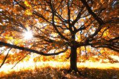 Dream-Like Autumn Forests By Czech Photographer Janek Sedlář | Bored Panda