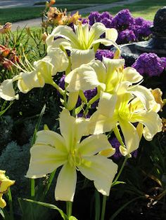 NIKKIS HAIKU - Daylily Haiku Thursday | Long Overdue: My favorites from 2011 ~ a girl and her garden - a daylily blog