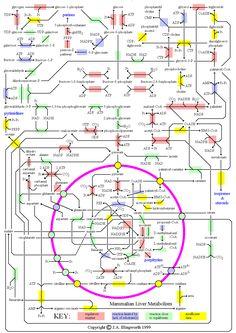 Metabolic Map