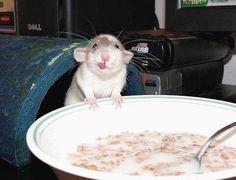 lol - goofy mouse!