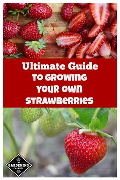 Growing Strawberries The Ultimate Guide Growing Strawberries The Ultimate Guide LisaJSieg lisajsieg Strawberry plant Strawberry plants are inexpensive to buy and are easy to grow nbsp hellip Strawberry Planters, Strawberry Garden, Fruit Garden, Garden Plants, House Plants, Strawberry Beds, Indoor Garden, Garden Art, Garden Tools