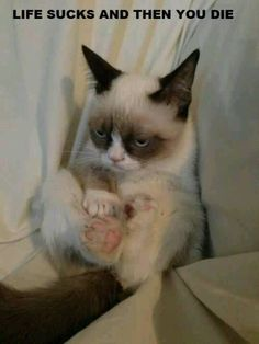 I don't really care about the words, but grumpy cat seems......cute.